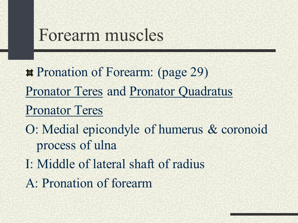 Forearm muscles Pronation of Forearm: (page 29)