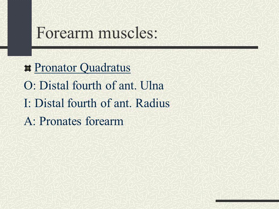 Forearm muscles: Pronator Quadratus O: Distal fourth of ant. Ulna