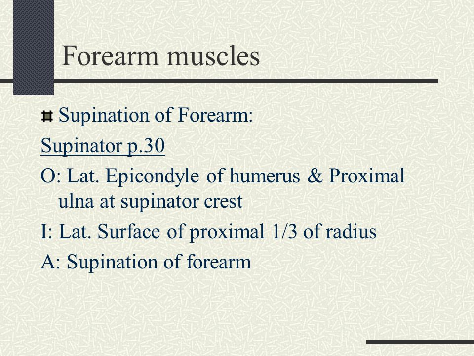 Forearm muscles Supination of Forearm: Supinator p.30