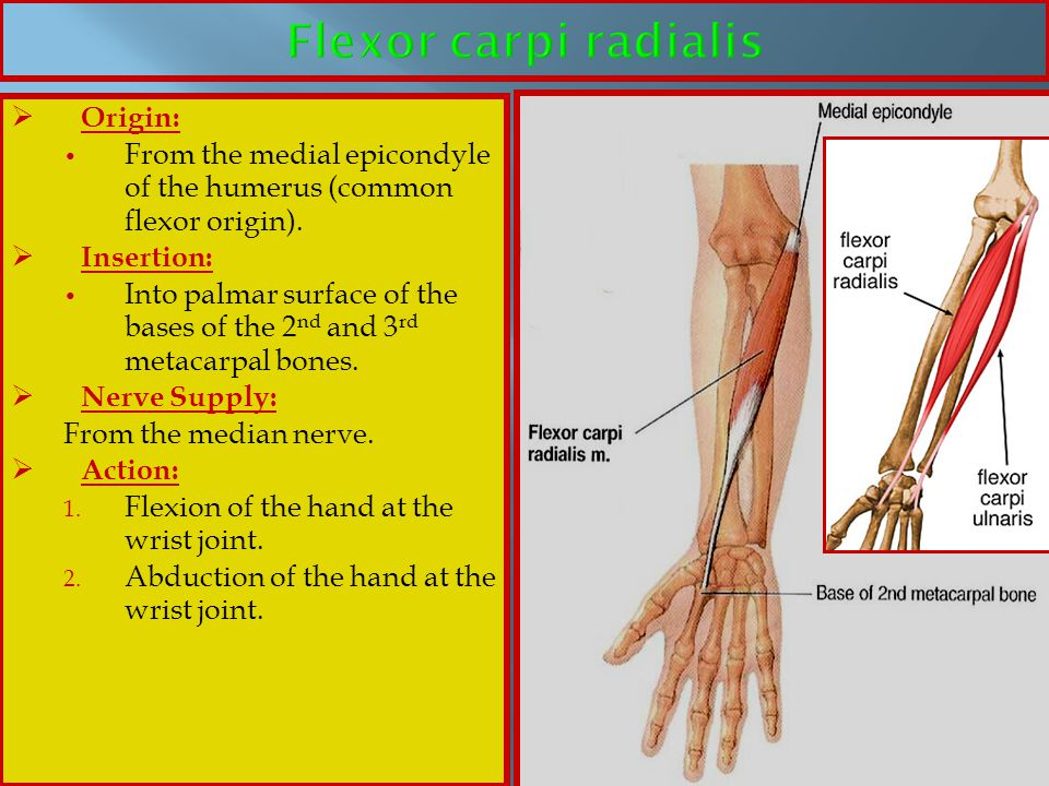 Flexor carpi radialis Origin: