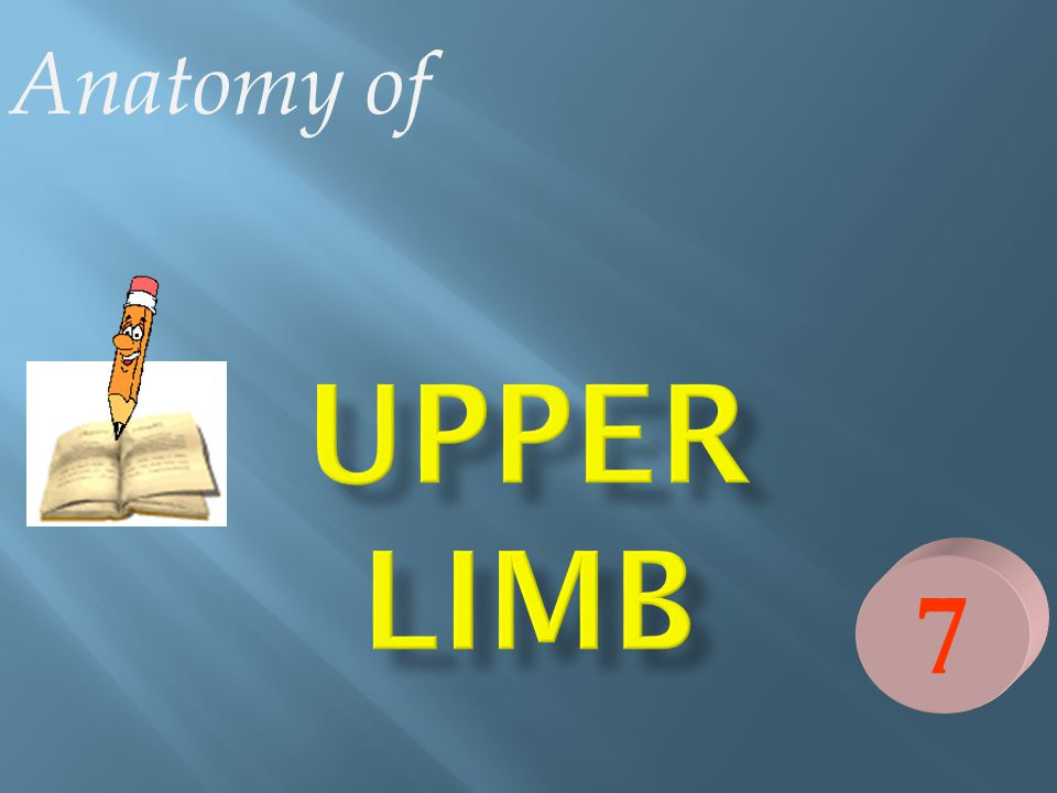 Anatomy of UPPER LIMB 7