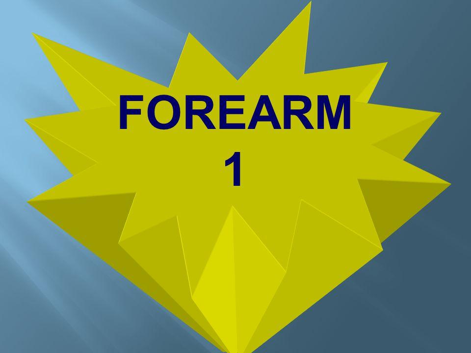 FOREARM 1