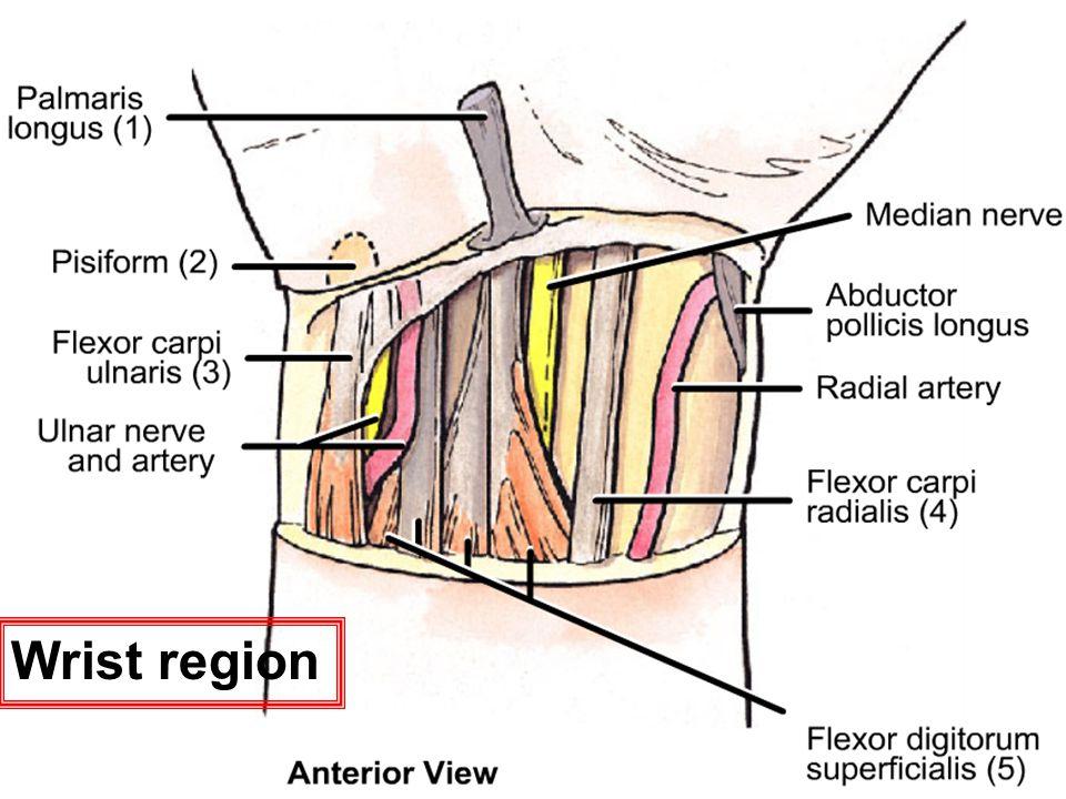 Wrist region