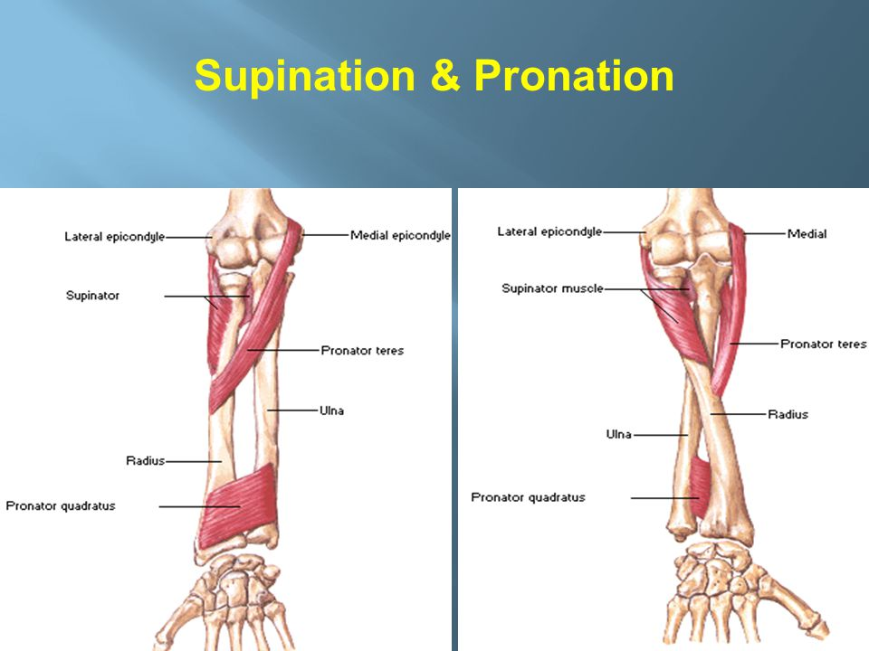 Supination & Pronation