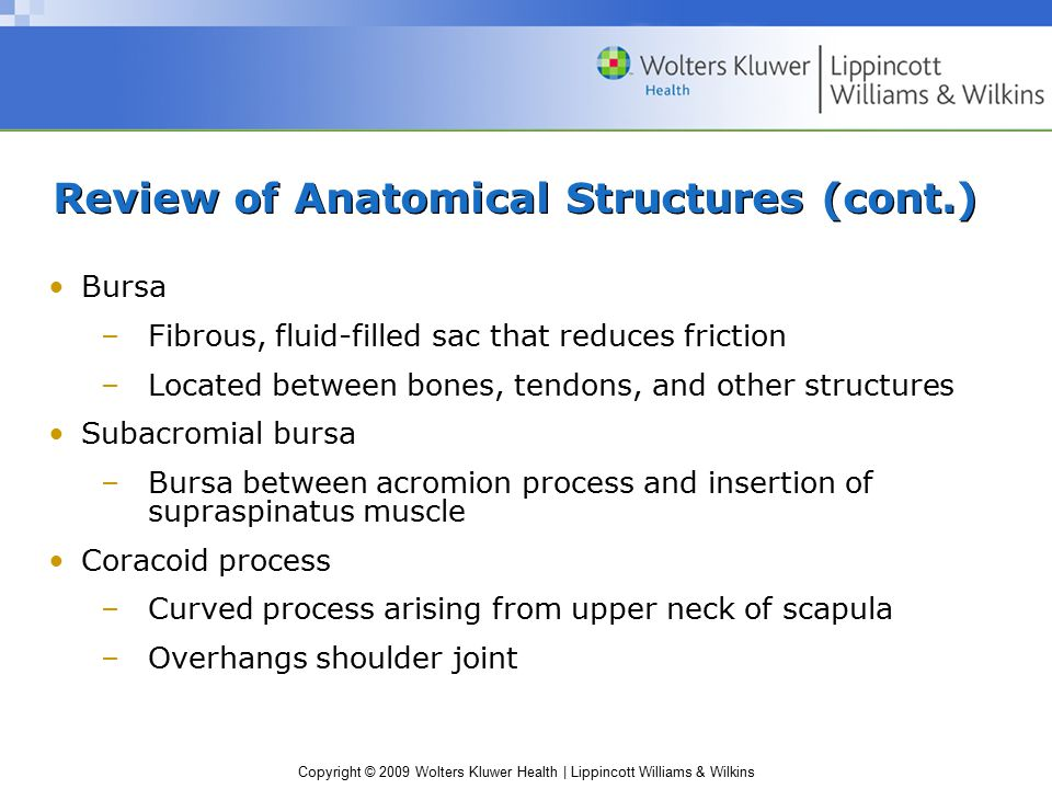 Review of Anatomical Structures (cont.)