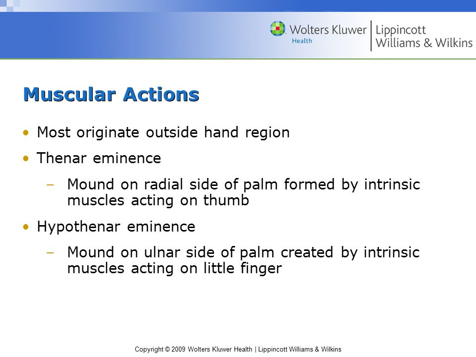 Muscular Actions Most originate outside hand region Thenar eminence