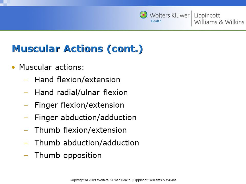 Muscular Actions (cont.)