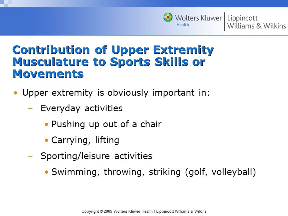 Contribution of Upper Extremity Musculature to Sports Skills or Movements
