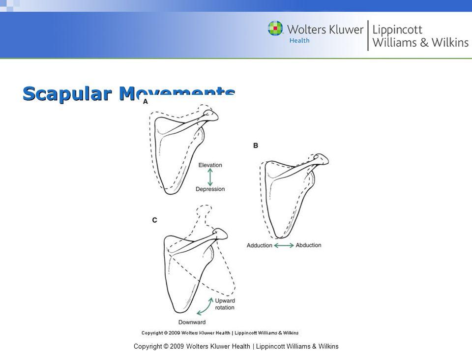 Scapular Movements