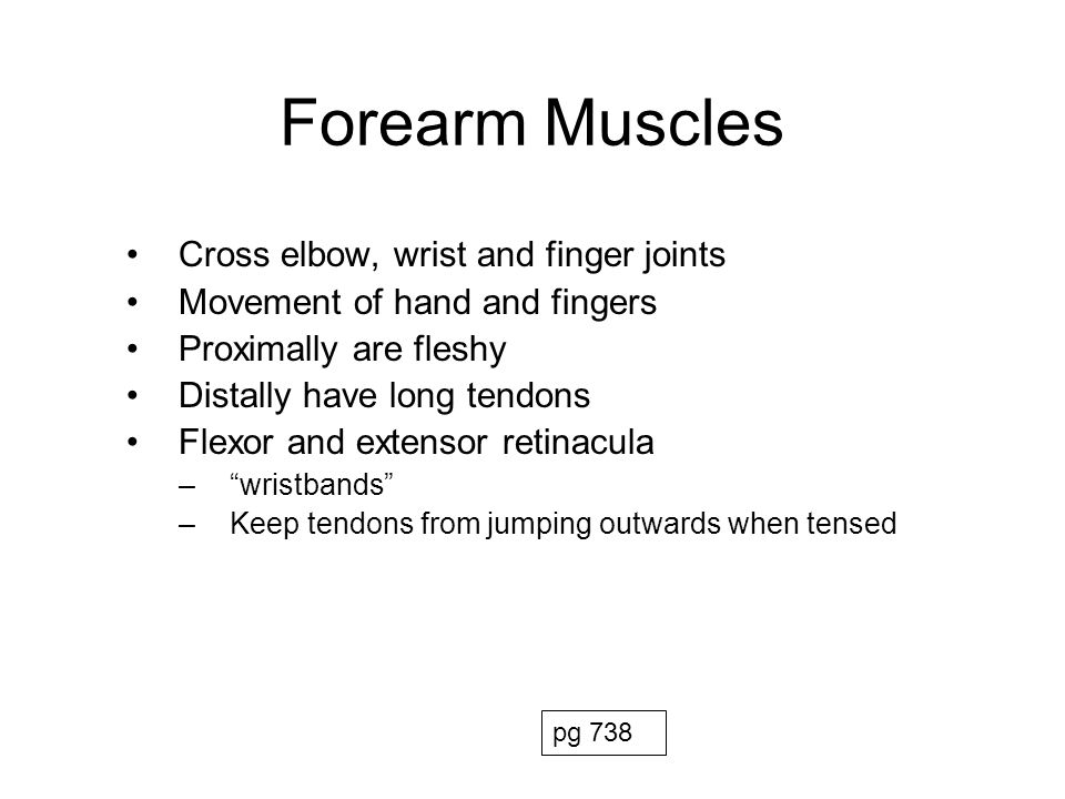 Forearm Muscles Cross elbow, wrist and finger joints