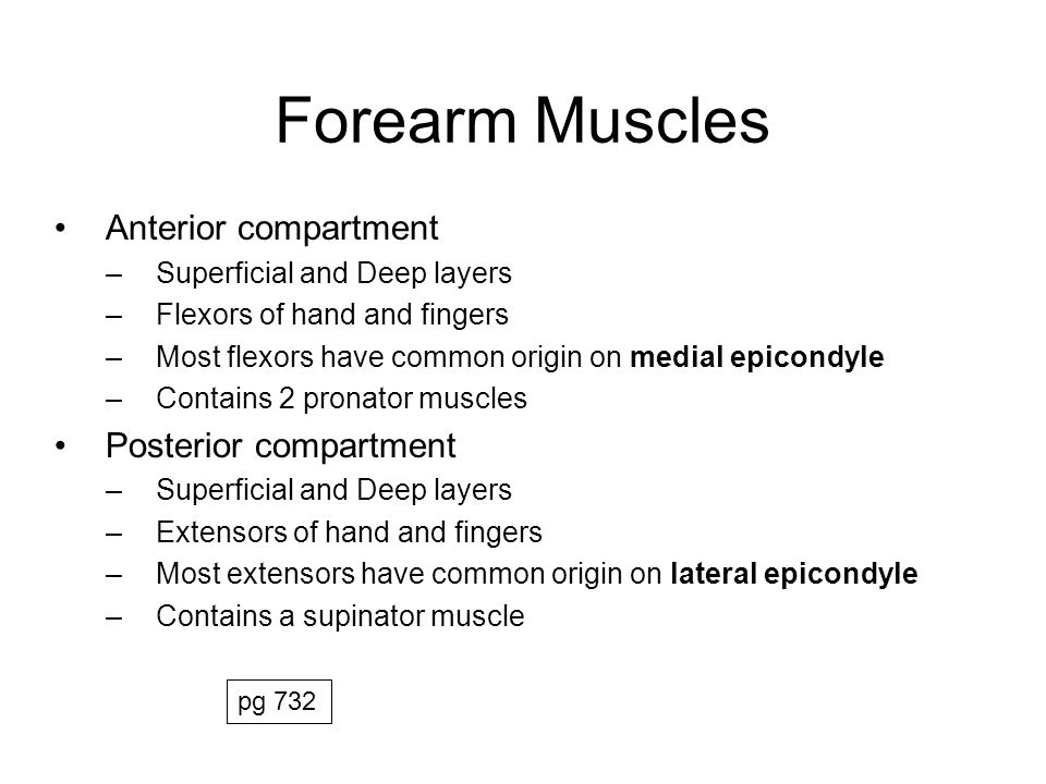 Forearm Muscles Anterior compartment Posterior compartment