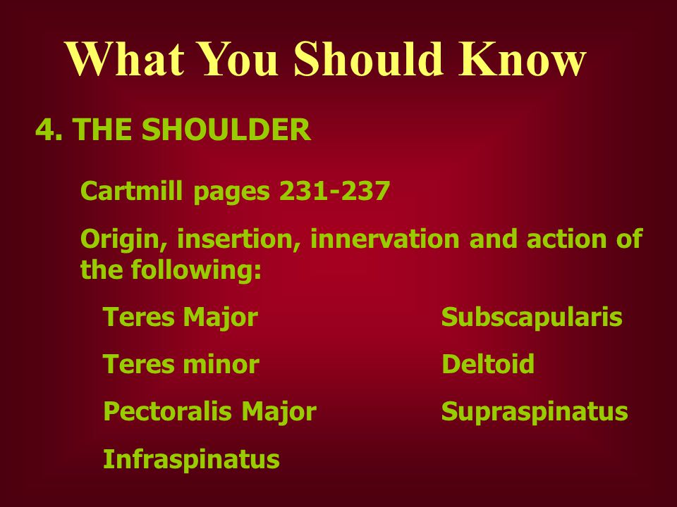 What You Should Know 4. THE SHOULDER