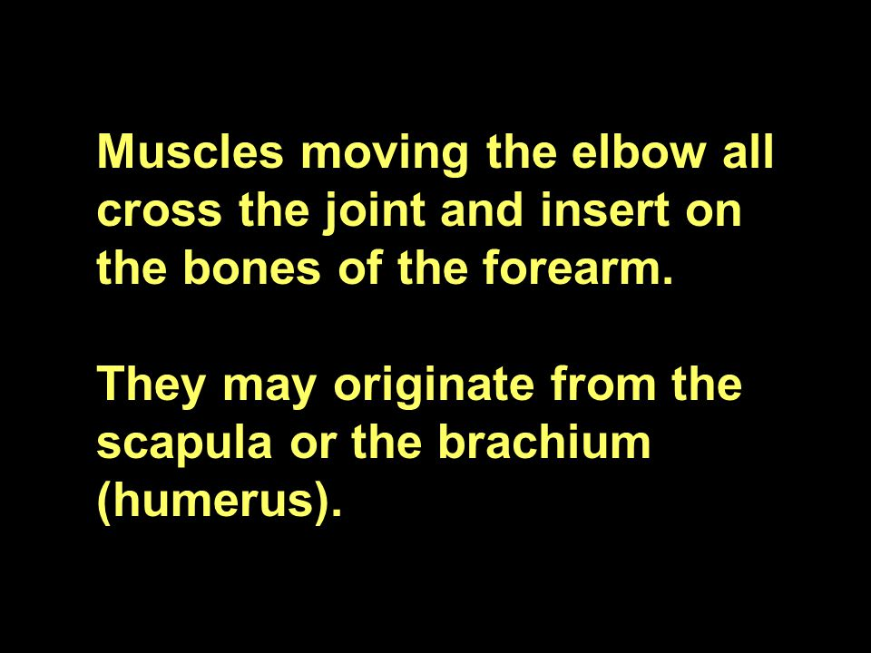 Muscles moving the elbow all cross the joint and insert on the bones of the forearm.