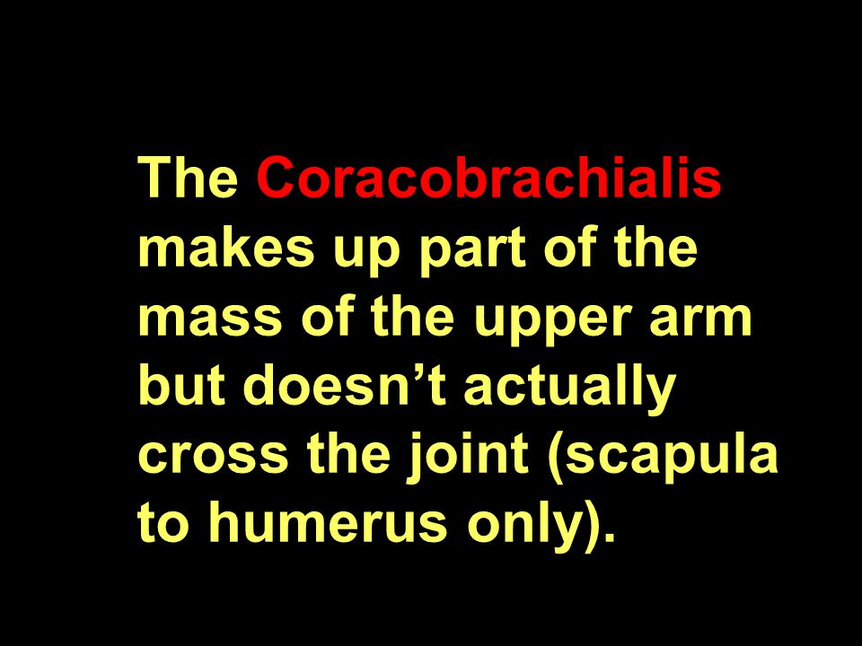The Coracobrachialis makes up part of the mass of the upper arm but doesn't actually cross the joint (scapula to humerus only).