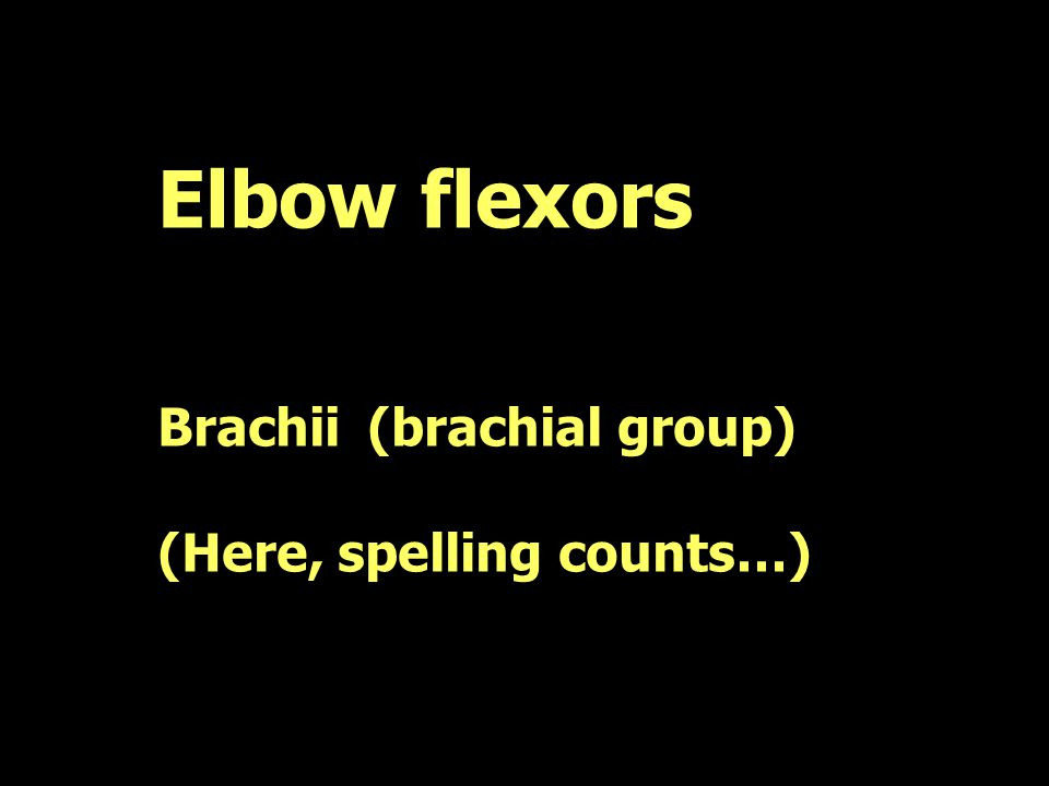 Elbow flexors Brachii (brachial group) (Here, spelling counts…)