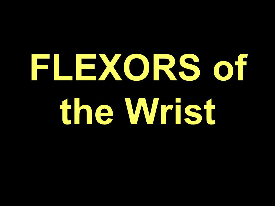 FLEXORS of the Wrist