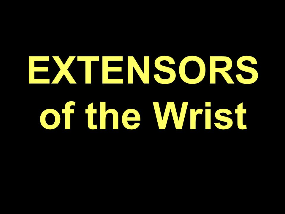 EXTENSORS of the Wrist