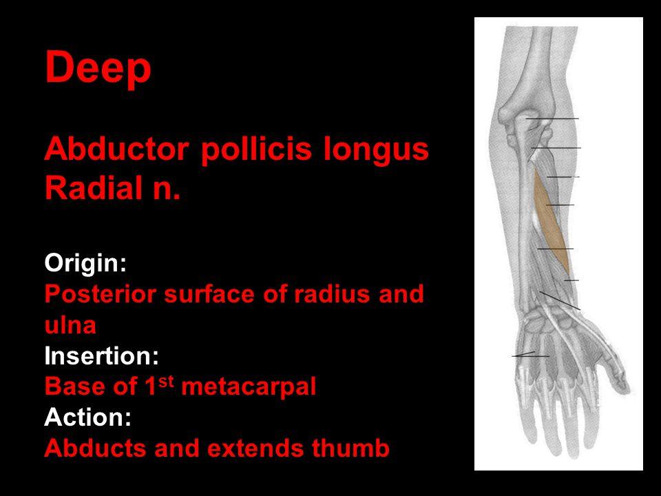 Deep Abductor pollicis longus Radial n. Origin: