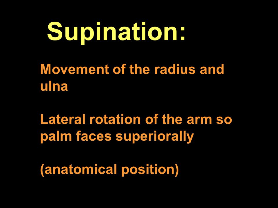 Supination: Movement of the radius and ulna