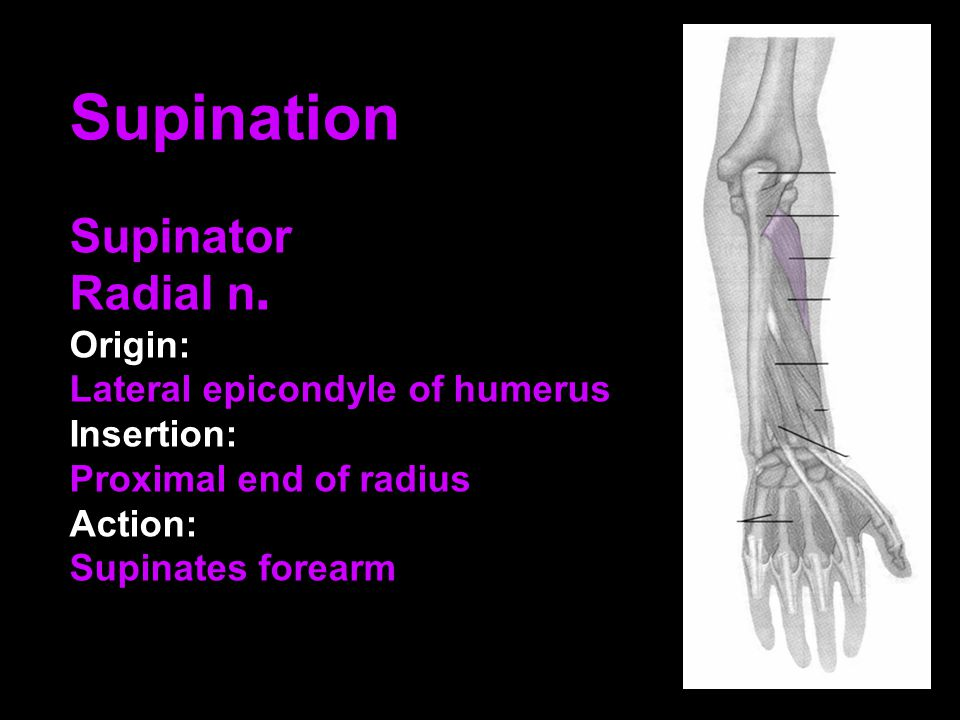 Supination Supinator Radial n. Origin: Lateral epicondyle of humerus