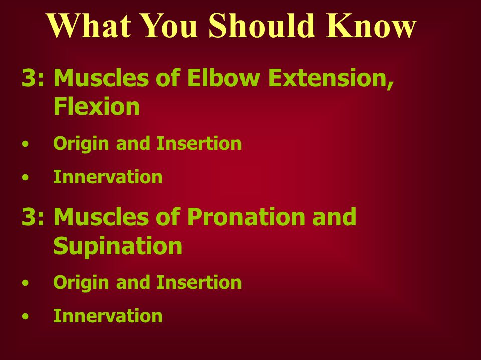What You Should Know 3: Muscles of Elbow Extension, Flexion