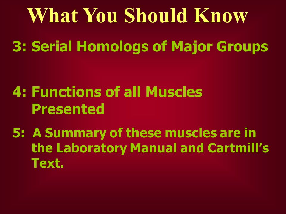 What You Should Know 3: Serial Homologs of Major Groups