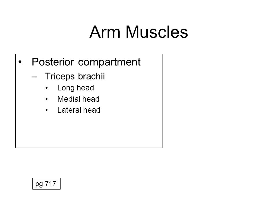 Arm Muscles Posterior compartment Triceps brachii Long head