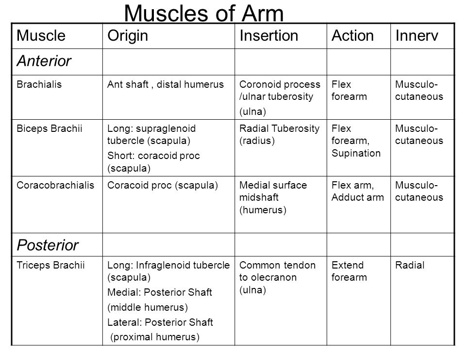 Muscles of Arm Muscle Origin Insertion Action Innerv Anterior