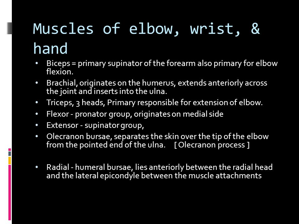 Muscles of elbow, wrist, & hand