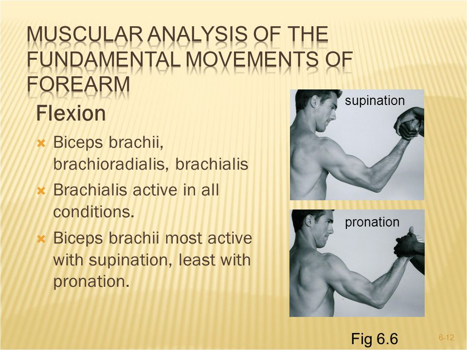MUSCULAR ANALYSIS OF THE FUNDAMENTAL MOVEMENTS OF FOREARM
