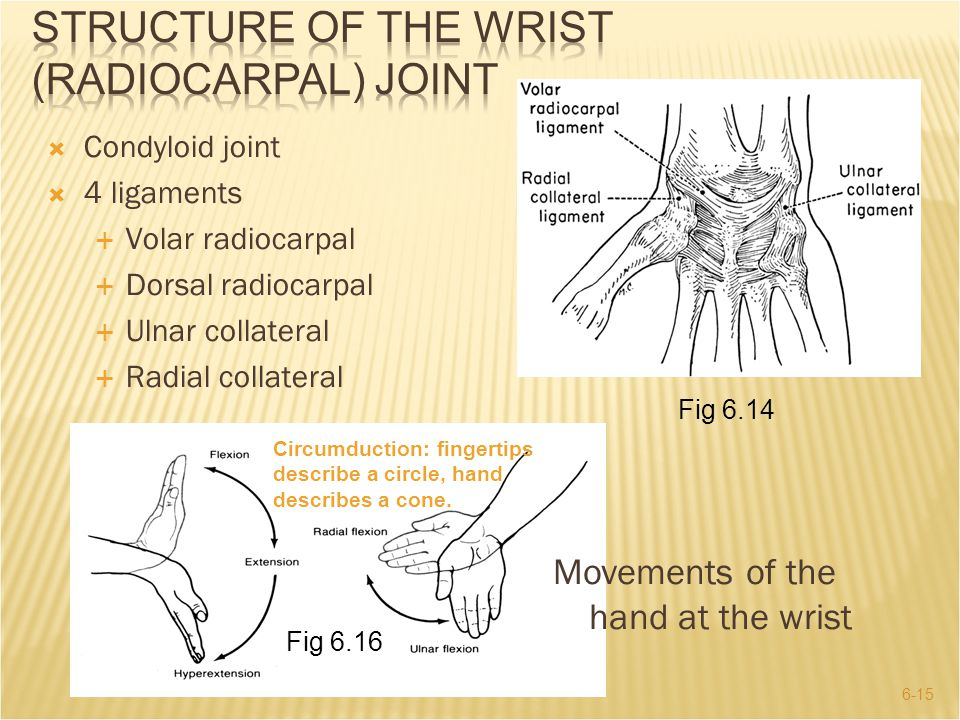 Structure of the Wrist (Radiocarpal) Joint