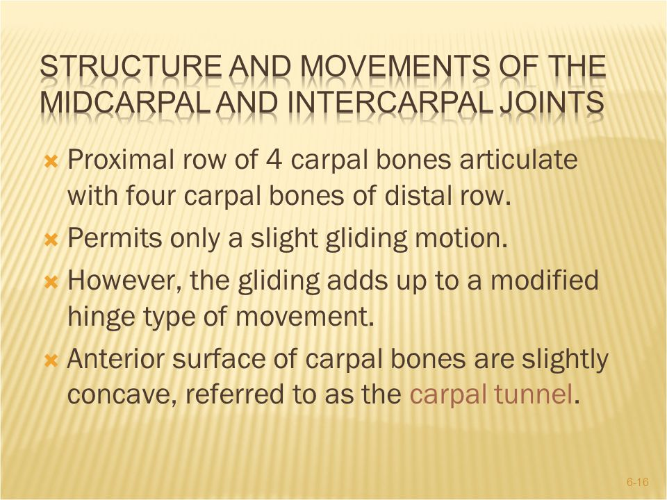 Structure and Movements of the Midcarpal and Intercarpal Joints
