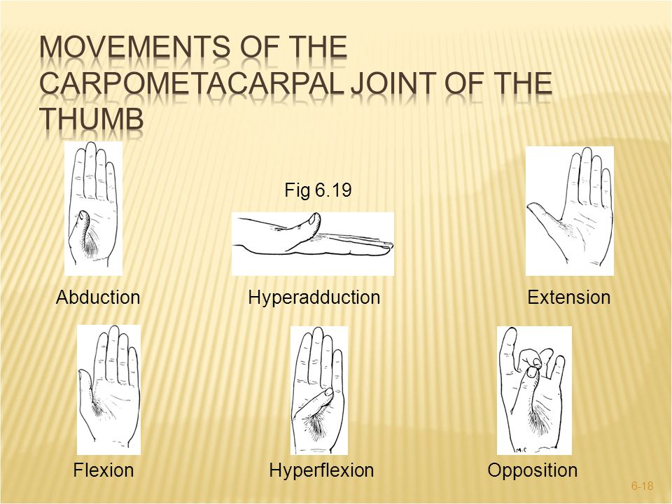 Movements of the Carpometacarpal Joint of the Thumb