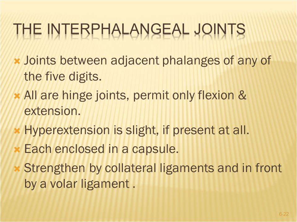 The Interphalangeal Joints