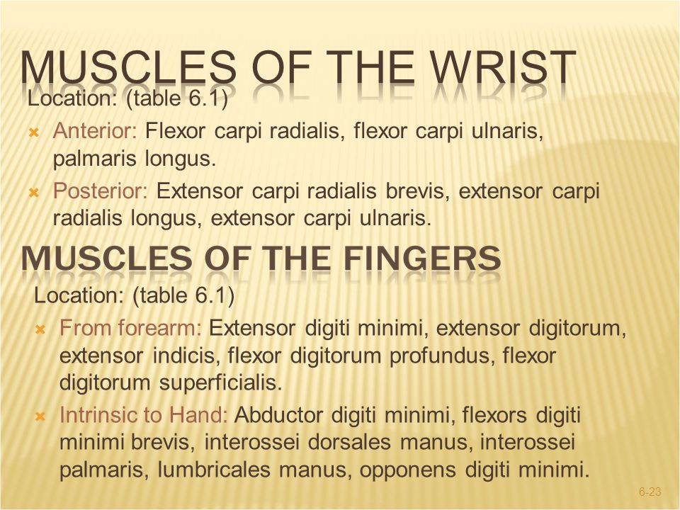 MUSCLES OF THE WRIST Location: (table 6.1)