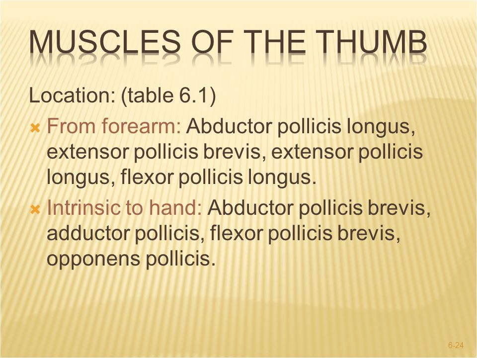 MUSCLES OF THE THUMB Location: (table 6.1)