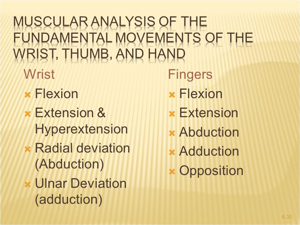 Muscular analysis of the fundamental movements of the wrist, thumb, and hand