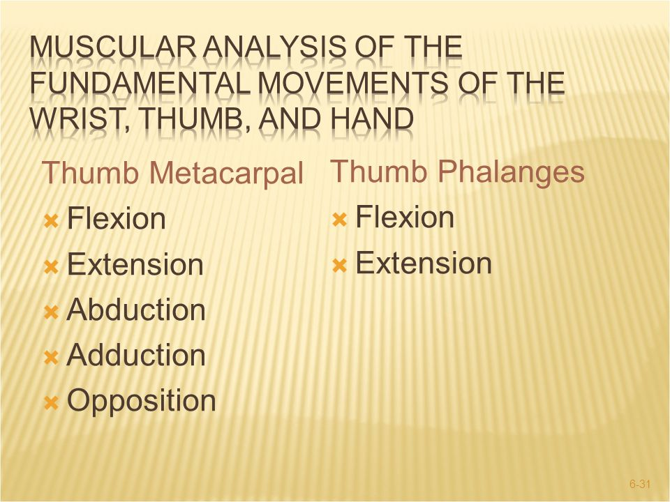 Thumb Metacarpal Thumb Phalanges Flexion Flexion Extension Extension