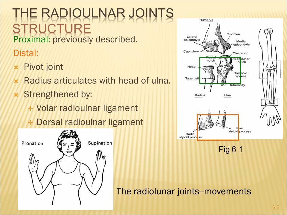 THE RADIOULNAR JOINTS Structure