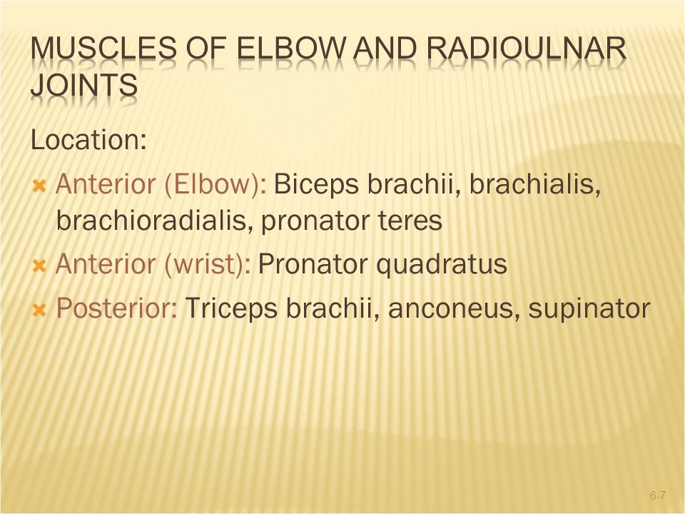 MUSclES OF ELBOW AND RADIOULNAR JOINTS