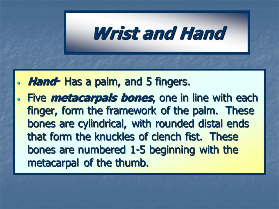 Wrist and Hand Hand- Has a palm, and 5 fingers.