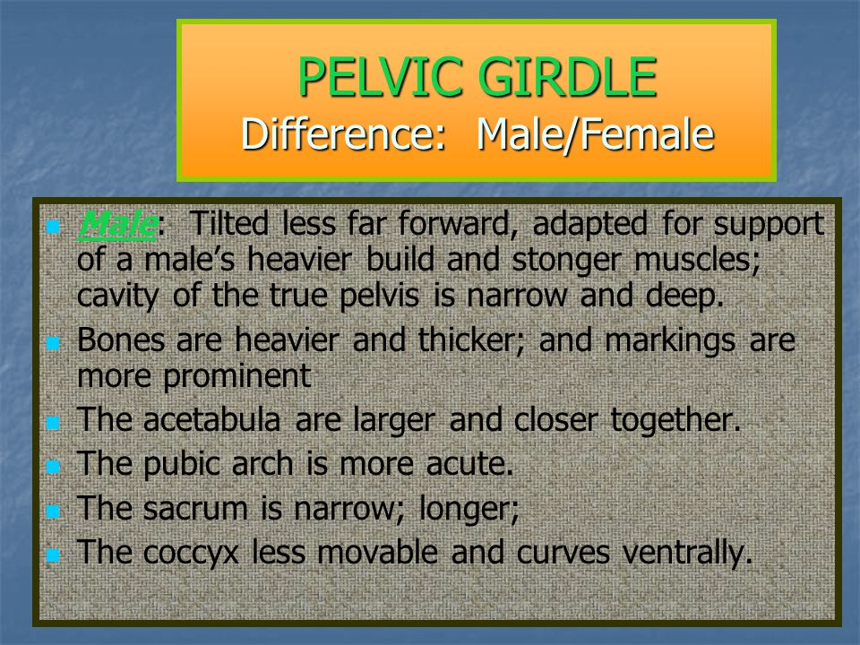 PELVIC GIRDLE Difference: Male/Female