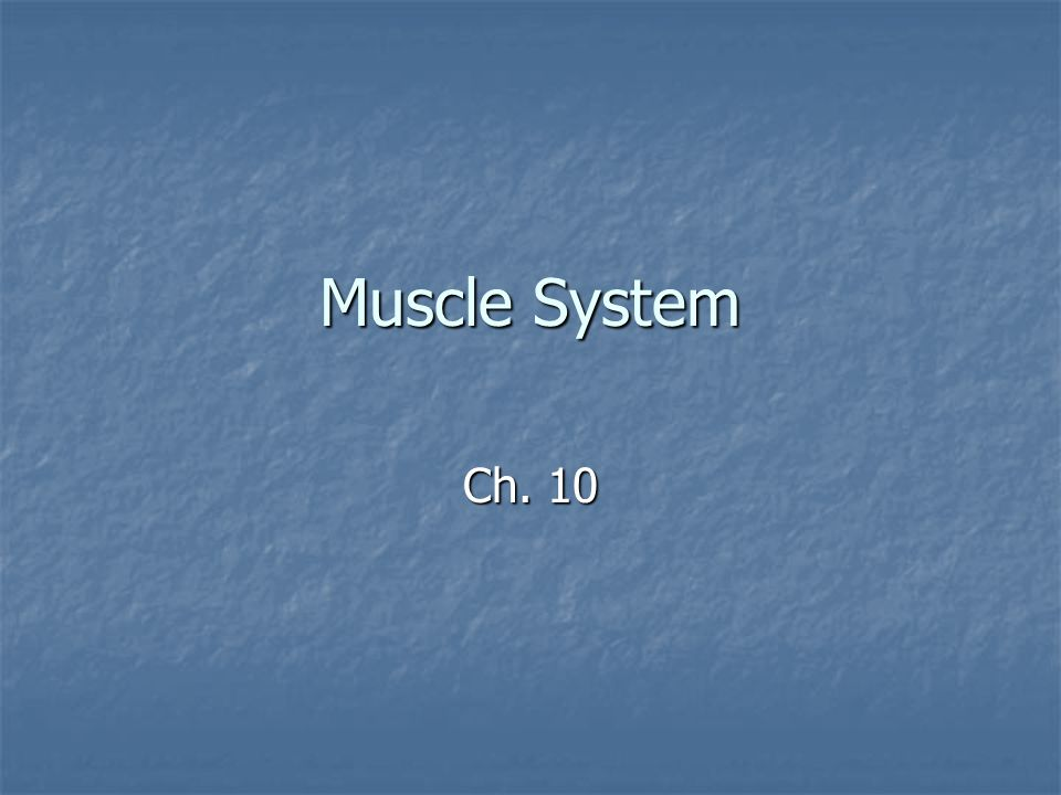Muscle System Ch. 10