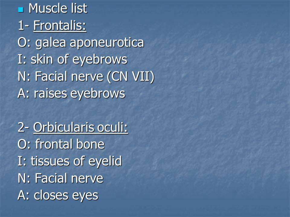 Muscle list 1- Frontalis: O: galea aponeurotica. I: skin of eyebrows. N: Facial nerve (CN VII) A: raises eyebrows.