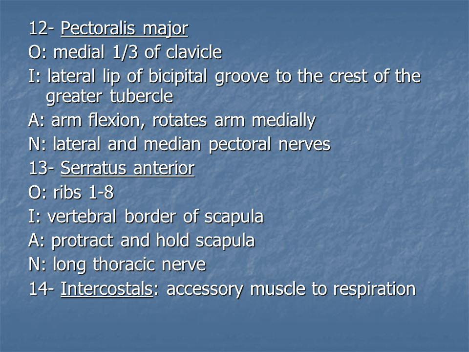 12- Pectoralis major O: medial 1/3 of clavicle. I: lateral lip of bicipital groove to the crest of the greater tubercle.