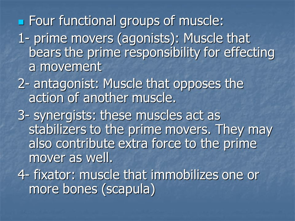 Four functional groups of muscle: