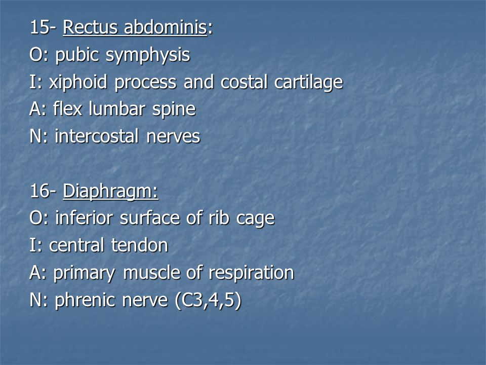 15- Rectus abdominis: O: pubic symphysis. I: xiphoid process and costal cartilage. A: flex lumbar spine.