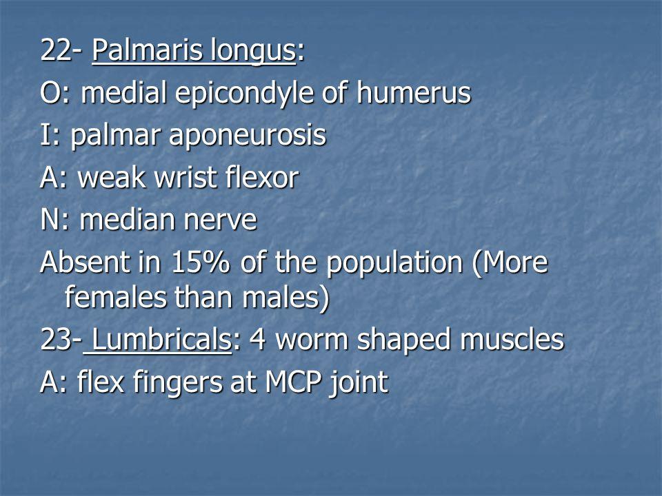 22- Palmaris longus: O: medial epicondyle of humerus. I: palmar aponeurosis. A: weak wrist flexor.