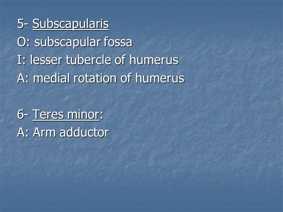 5- Subscapularis O: subscapular fossa. I: lesser tubercle of humerus. A: medial rotation of humerus.
