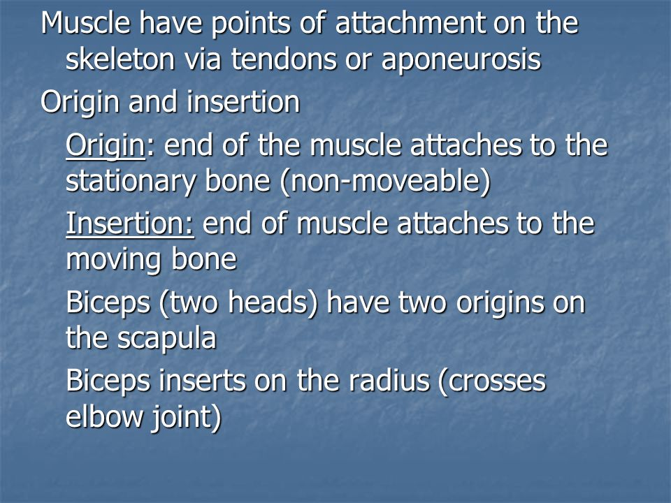 Muscle have points of attachment on the skeleton via tendons or aponeurosis